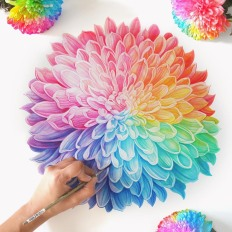 Rainbow Chrysanthemum in Watercolor by: Sanjana Baijnath