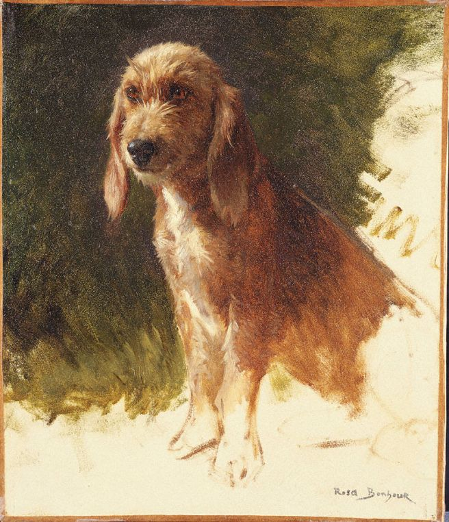 Study of a Dog, Princeton University Art Museum